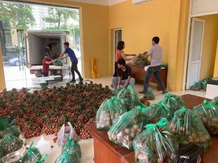 Trung tâm Khuyến nông Hà Nội chung tay tiêu thụ vải thiều Thanh Hà - ảnh 1