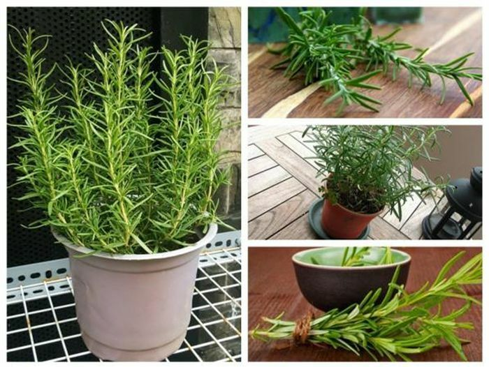 3 loại cây gia vị, có tinh dầu trồng trong nhà bếp giúp khử mùi cực tốt - ảnh 1