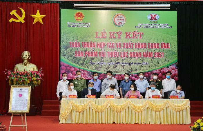 TKV hỗ trợ tiêu thụ gần 200 tấn vải thiều Bắc Giang - ảnh 1