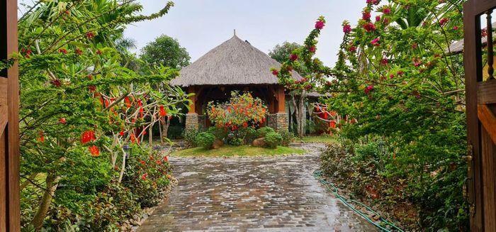 Vợ chồng Hà Nội về ngoại ô xây nhà mái lá, có đủ bể bơi xanh mát - ảnh 1