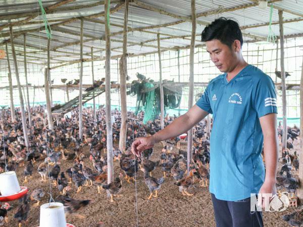Ninh Thuận: Giá cám công nghiệp