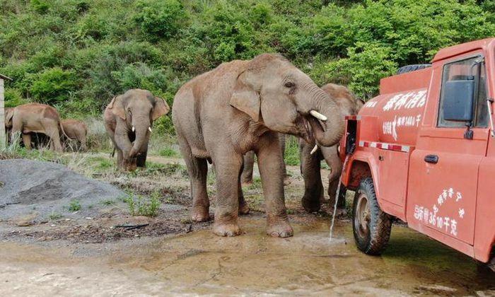 Lời cảnh báo với Trung Quốc từ đàn voi ''di cư'' bất thường - ảnh 1