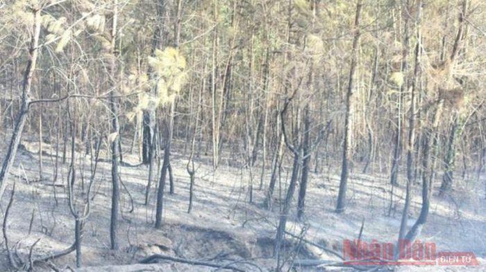 Dập tắt cháy rừng thông tại Nghệ An