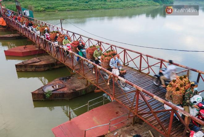 Bắc Giang: Kiếm tiền triệu từ việc đẩy xe chở vải lên dốc cầu phao trong mùa thu hoạch - ảnh 1