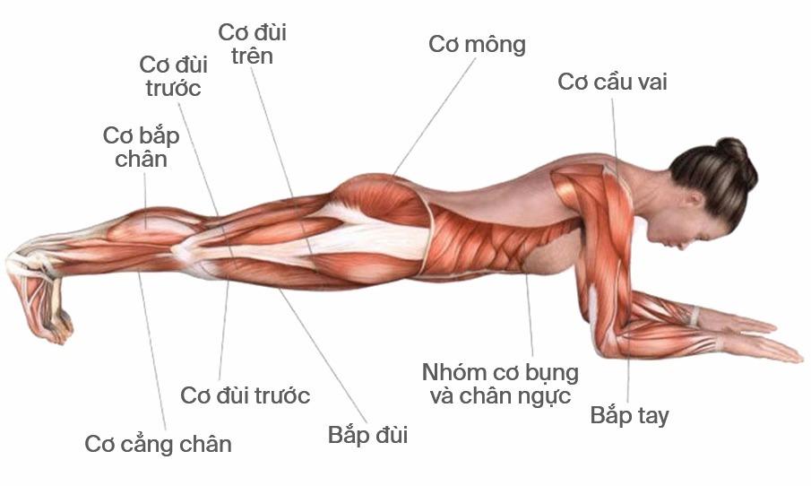 1 phút plank bằng 1.000 cái gập bụng nhưng còn bí mật bạn nên biết