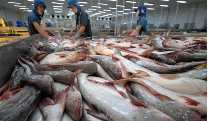 Lượng cá tra tồn kho của Mỹ đã hết, cơ hội cho thủy sản Việt Nam - ảnh 1