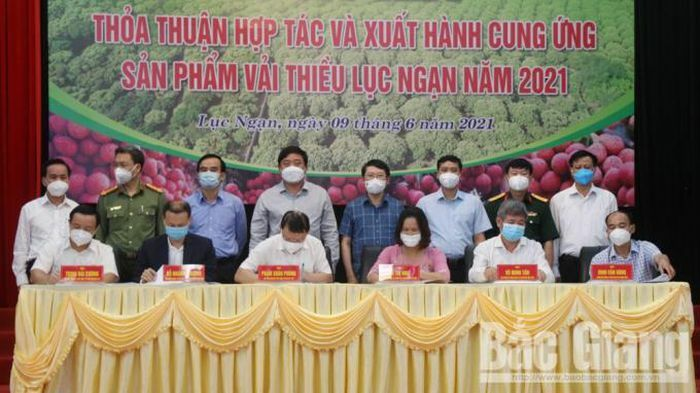 Trong 2 tháng Tập đoàn TKV cam kết tiêu thụ 180 triệu tấn vải thiều Lục Ngạn - ảnh 1