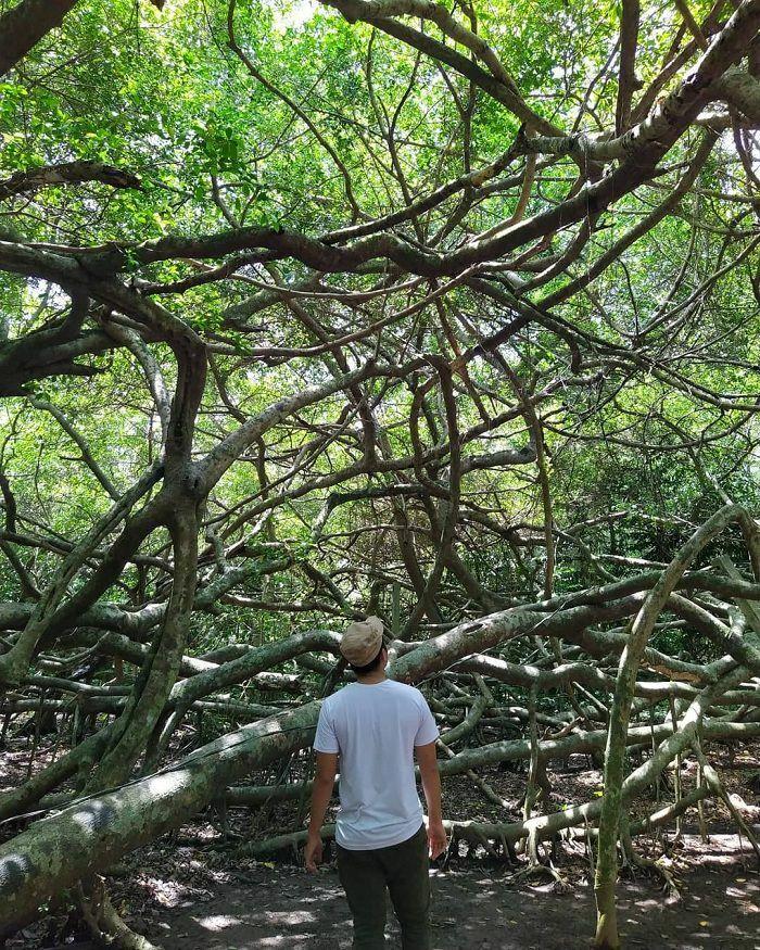 Khu di tích Giàn Gừa Cần Thơ – điểm đến với vẻ đẹp ma mị như mê cung của đất Tây Đô - ảnh 1