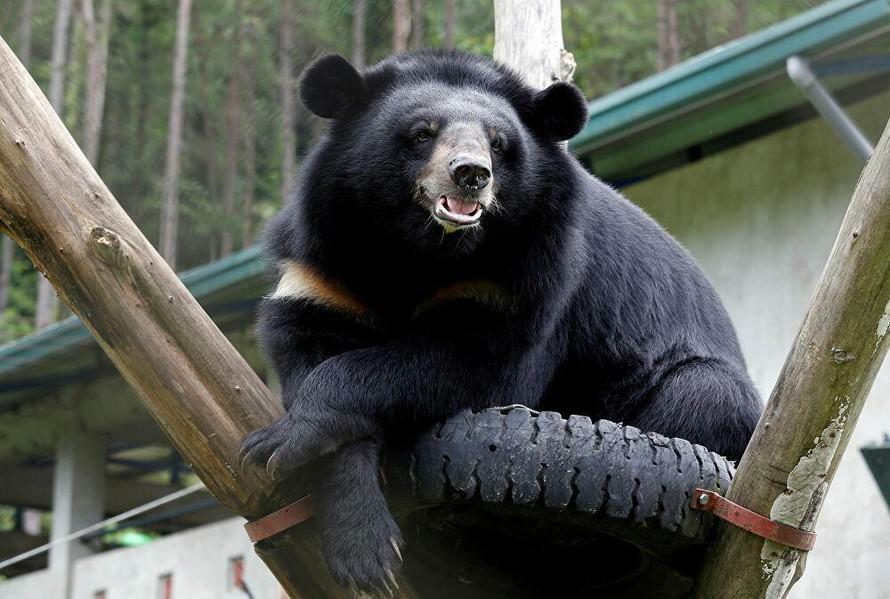 Vụ bán 2 chi gấu bị phạt 700 triệu đồng, Trung tâm Giáo dục Thiên nhiên nói gì? - ảnh 1