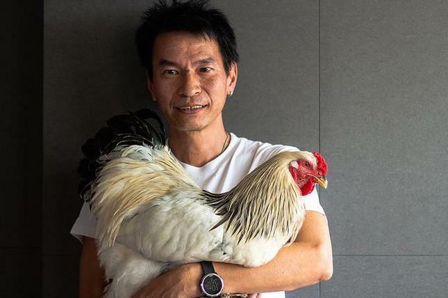 Tranh cãi chuyện người đàn ông đối mặt án tù vì nuôi gà trong chung cư - ảnh 1