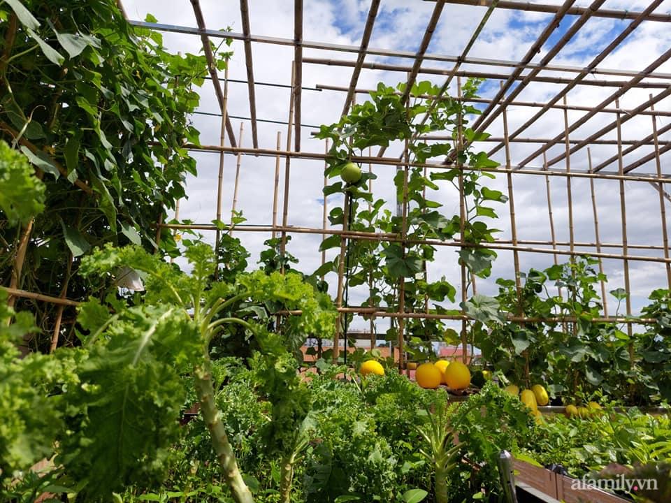 Sân thượng 50m² không khác gì trang trại với đủ loại rau quả sạch theo mùa của mẹ đảm ở Hà Nội - ảnh 1