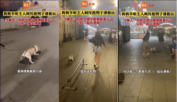 Chú mèo đi vệ sinh bằng 2 chân gây sốt mạng xã hội - ảnh 1