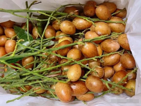 Quất hồng bì vốn chỉ trong mùa hè mới có! Tranh thủ làm 4 món ăn tại nhà, vừa bổ dưỡng lại thơm ngon - ảnh 1