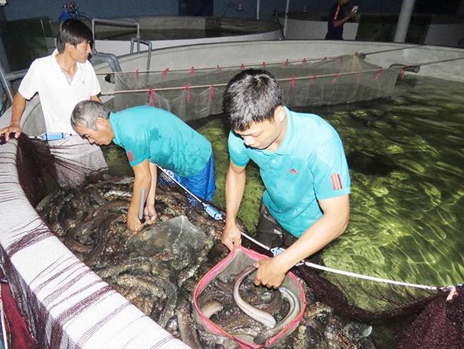 Loài cực quý ngủ ngày, ăn đêm, ở Việt Nam nuôi rồi bán nửa triệu/kg