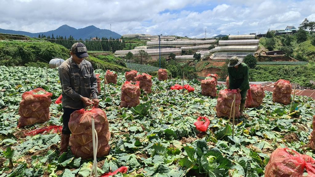 Hơn 250 tấn rau củ từ Đà Lạt hỗ trợ TP.HCM và các tỉnh vùng dịch Covid-19 - ảnh 1