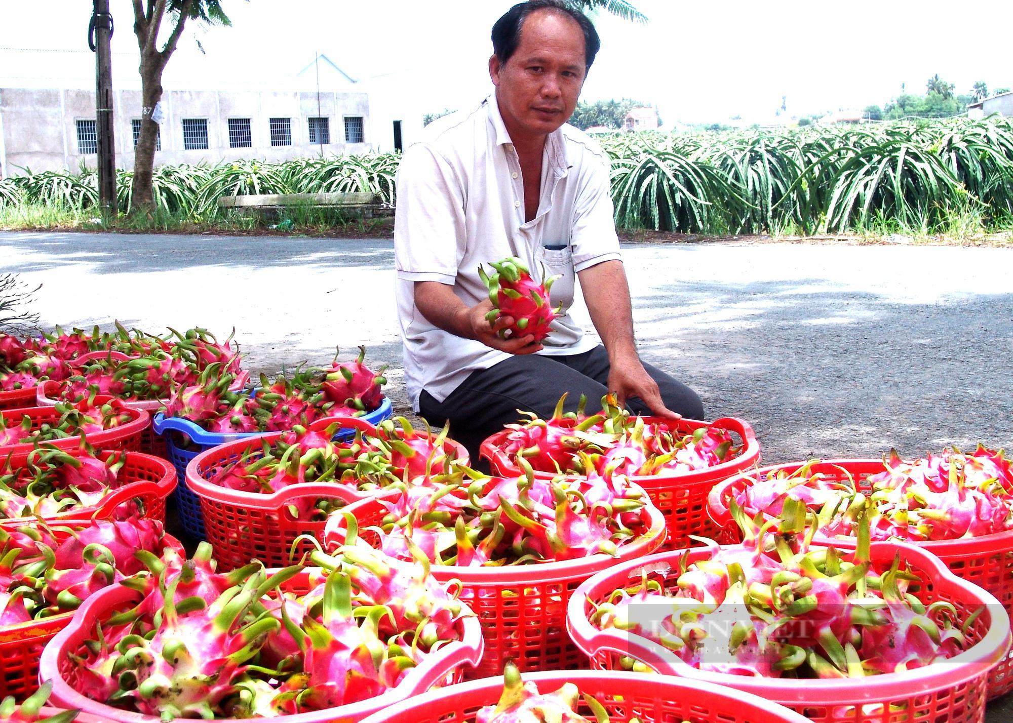 Long An: Một nông dân xuất kho 200 tấn thanh long ủng hộ chống dịch