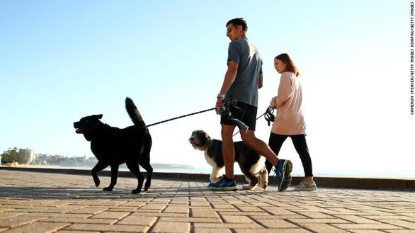 Bị phạt 2.700 USD nếu không dắt chó đi dạo mỗi ngày - ảnh 1