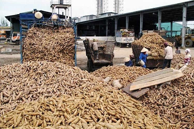 Nửa đầu năm 2021, xuất khẩu sắn và sản phẩm sắn thu về 611,69 triệu USD - ảnh 1