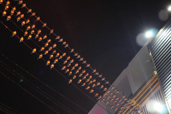 Tiền Giang: Chim én đậu kín giữa khu dân cư
