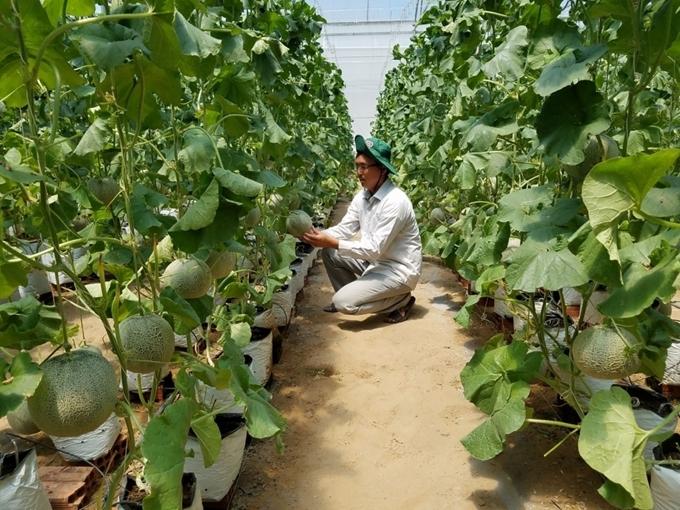 Lựa chọn giống có năng suất, chất lượng cao khi chuyển đổi cây trồng trên đất lúa - ảnh 1