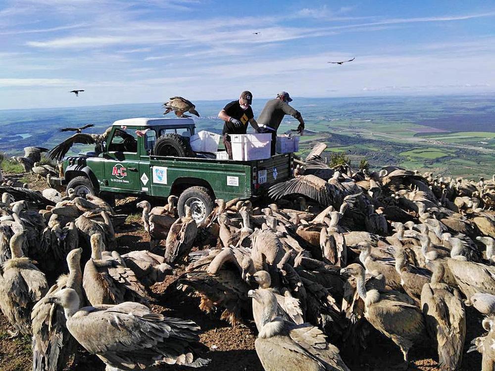 Một chiếc xe vừa tới khu vực núi cao thì hàng trăm con chim to lớn vây quanh, xếp hàng ngay ngắn – chúng định làm gì?