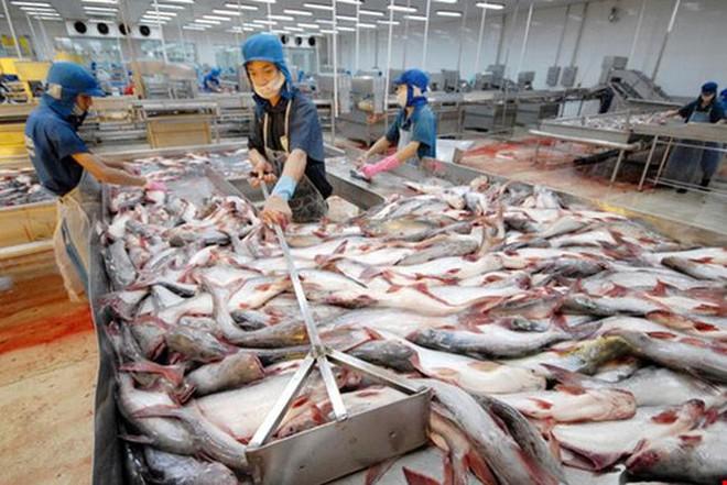 Hơn 100 nhà máy chế biến thủy sản phải đóng cửa vì Covid-19