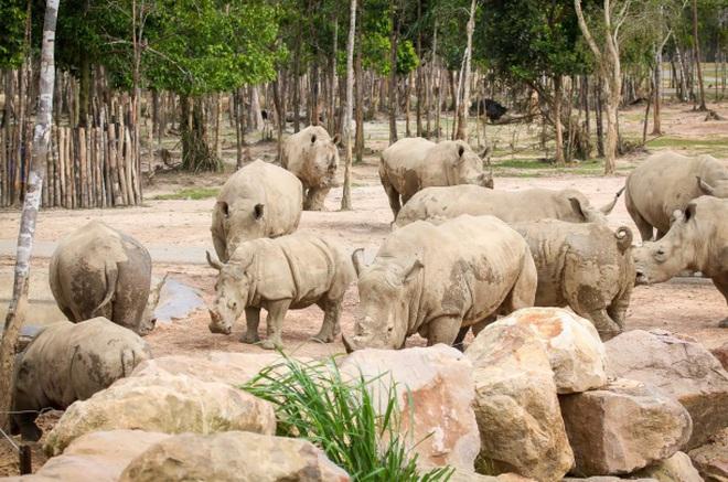 """Khám phá cuộc sống hoang dã """"thời giãn cách"""" bên trong công viên bảo tồn lớn hàng đầu châu Á"""