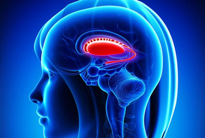 Trí tuệ nhân tạo sẽ khó đả bại loài người bằng vũ lực, xóa bỏ não bộ và xâm chiếm cơ thể sẽ dễ dàng hơn nhiều
