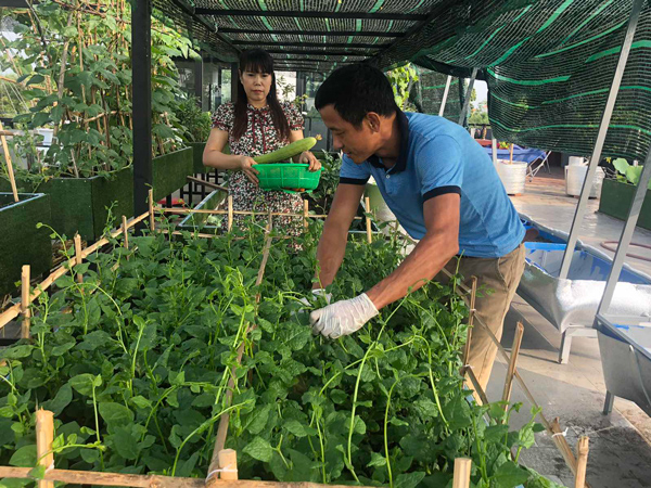 Ông bố 4 con chi 4 triệu đồng để trồng sen trên sân thượng, ai nhìn cũng mê