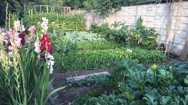Muốn vơi nỗi nhớ quê, gia đình Việt làm vườn rau, trái sum suê