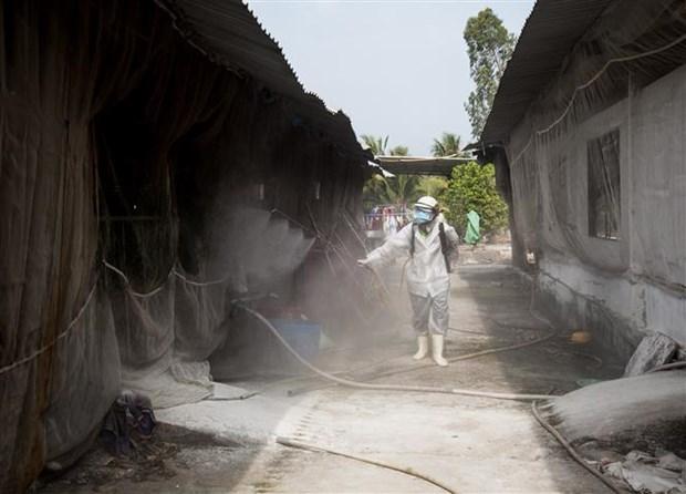 Xuất hiện các ổ dịch tả lợn châu Phi ở tỉnh Kiên Giang - ảnh 1