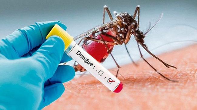 Thời tiết giao mùa dễ bùng dịch sốt xuất huyết, hãy dắt túi ngay 6 bài thuốc điều trị cực hiệu quả phòng khi dùng đến