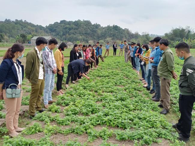 Lạng Sơn tập huấn cho nông dân quản lý và duy trì mã số vùng trồng thạch đen - ảnh 1