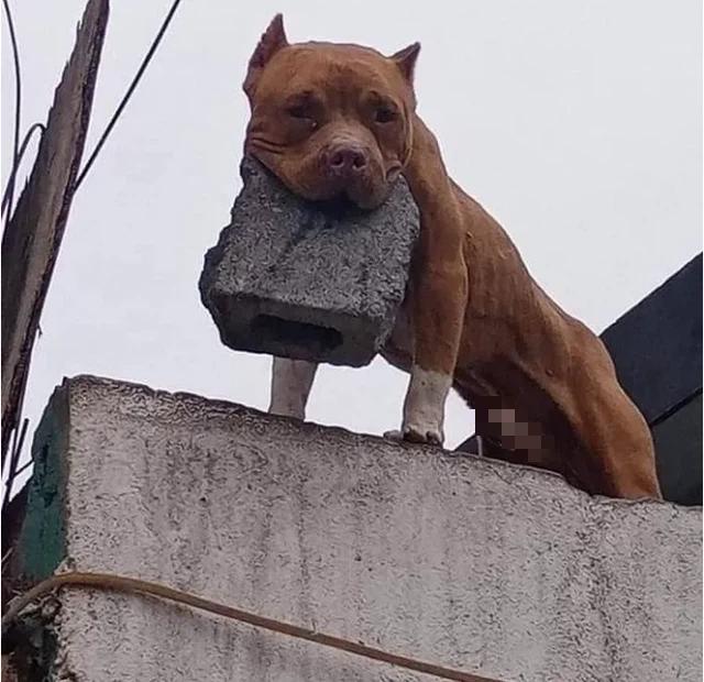 Ghét bị làm phiền, người đàn ông huấn luyện cún cưng ném gạch vào người gõ cửa khiến CĐM sửng sốt - ảnh 1