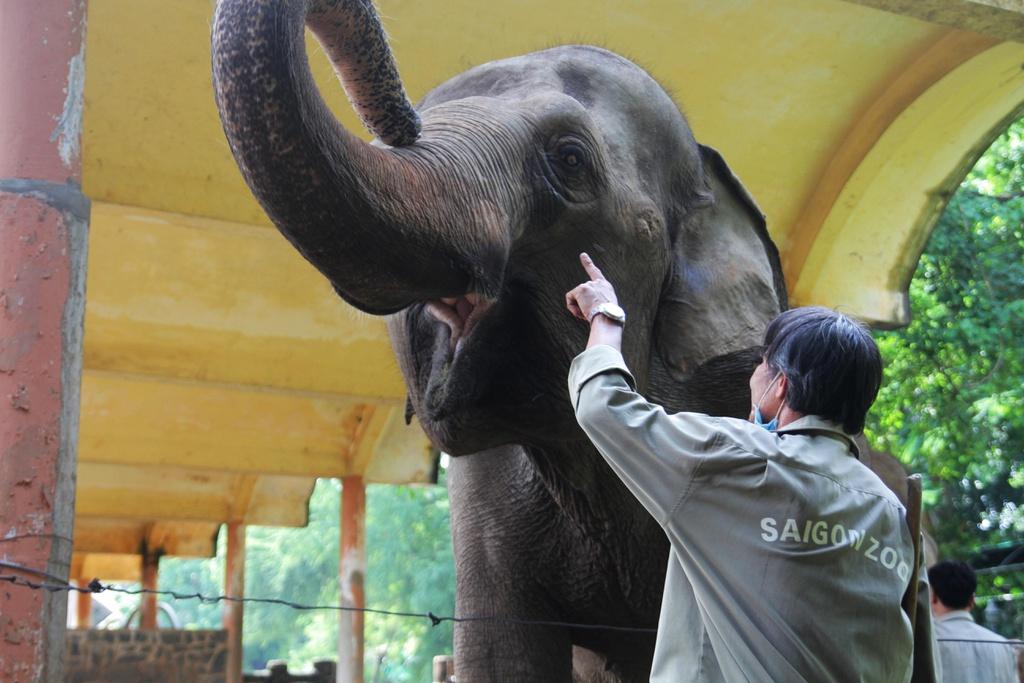 Bầy thú ở Thảo Cầm Viên Sài Gòn sống ra sao trong mùa giãn cách?