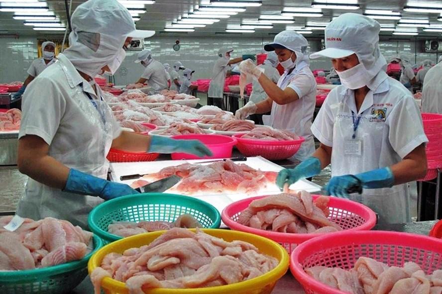 Nhiều giải pháp đồng bộ để vực dậy chuỗi sản xuất cá tra