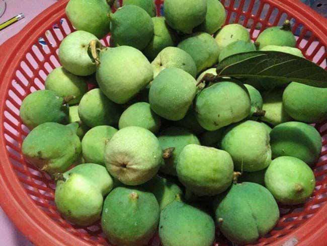 Loại quả mọc dại ở Việt Nam, xưa không ai ngó ngàng, nay 350.000 đồng/kg kiếm tiền ngon ơ