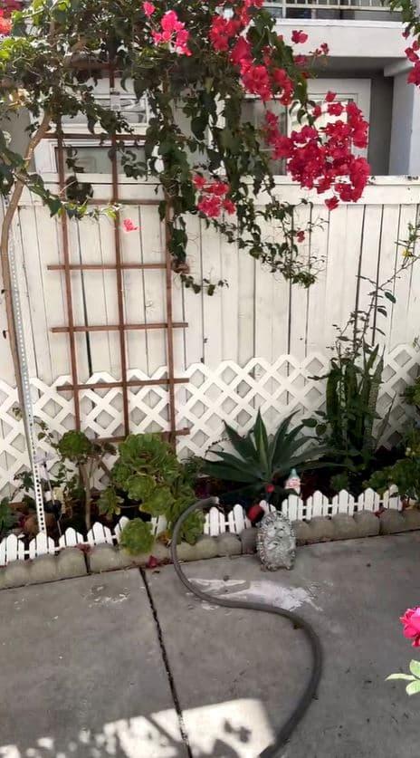 Ngôi nhà giản dị tại Mỹ của cố ca sĩ Phi Nhung: Cây cối ra quả xum xuê, mọi vật vẫn còn lưu giữ