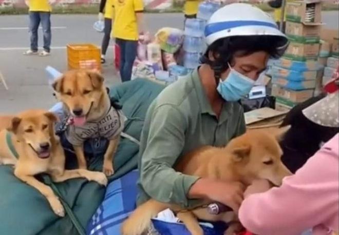 Vụ tiêu hủy 16 con chó mèo: Tôi buồn vì nhiều người