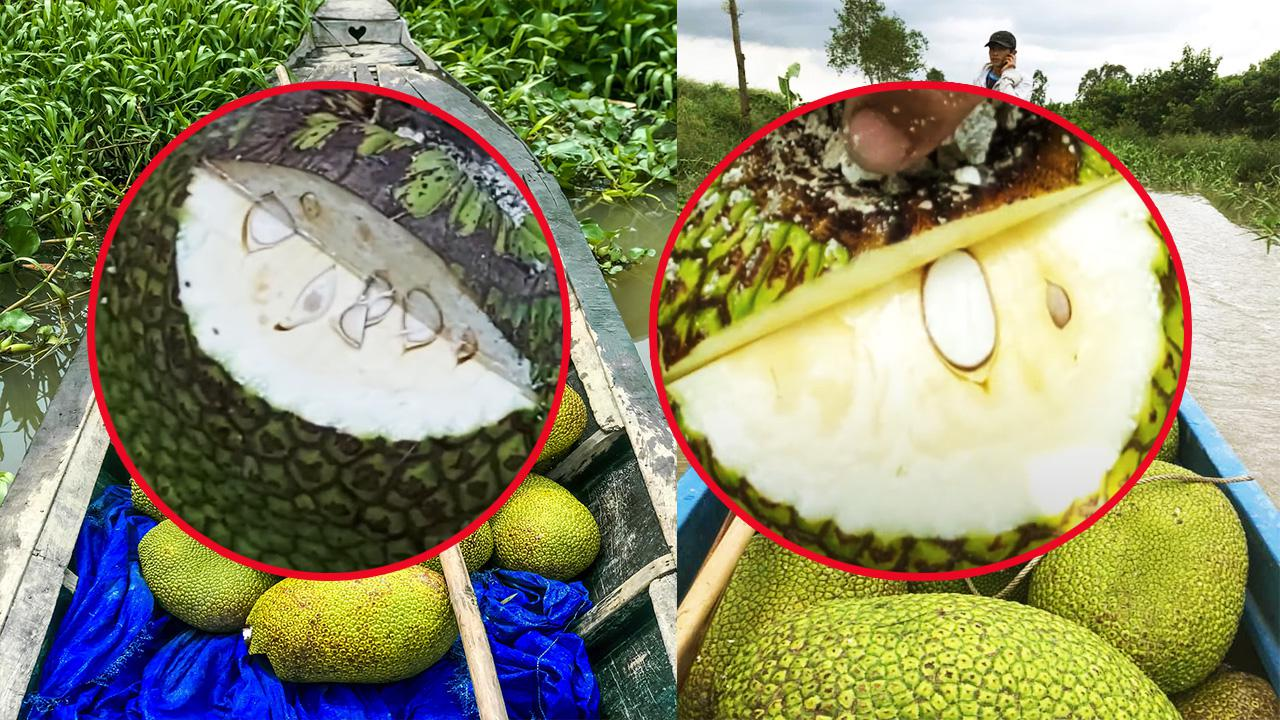 Giá mít Thái hôm nay 17/10: Người dân lo lắng khi trái mít bị sượng múi, múi mít dư nước