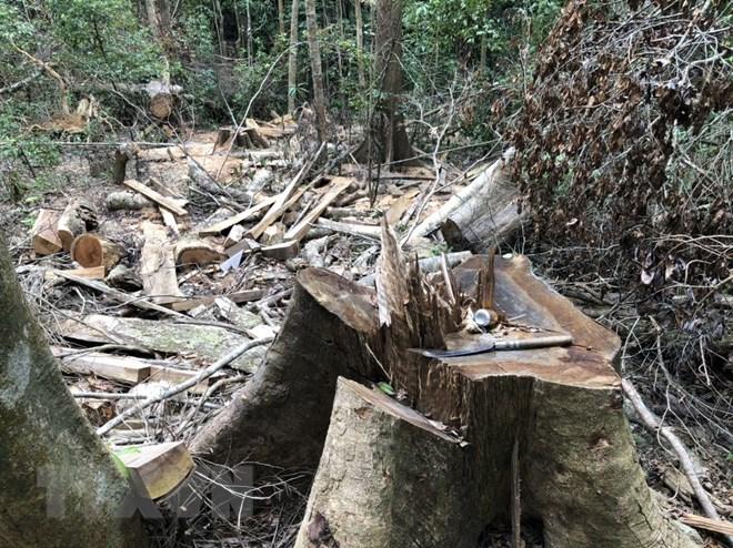 Quảng Ngãi chỉ đạo xử lý vụ phá rừng phòng hộ đầu nguồn xã Sơn Long