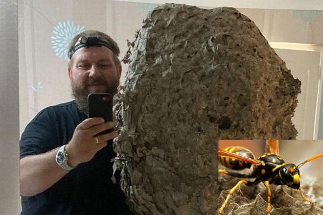 Choáng với tổ ong dài gần một mét