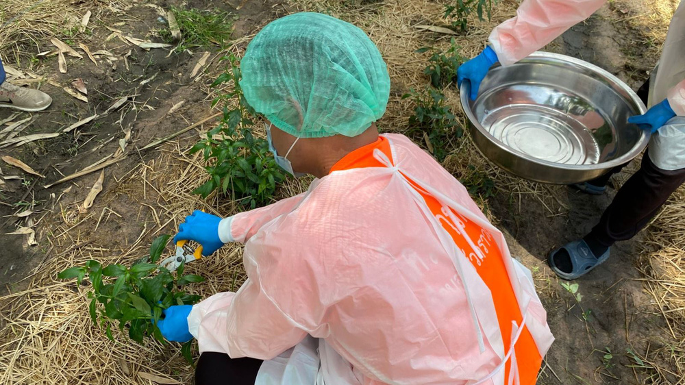 Thái Lan sử dụng thảo dược 'rẻ và hiệu quả' điều trị COVID-19 như thế nào - ảnh 1