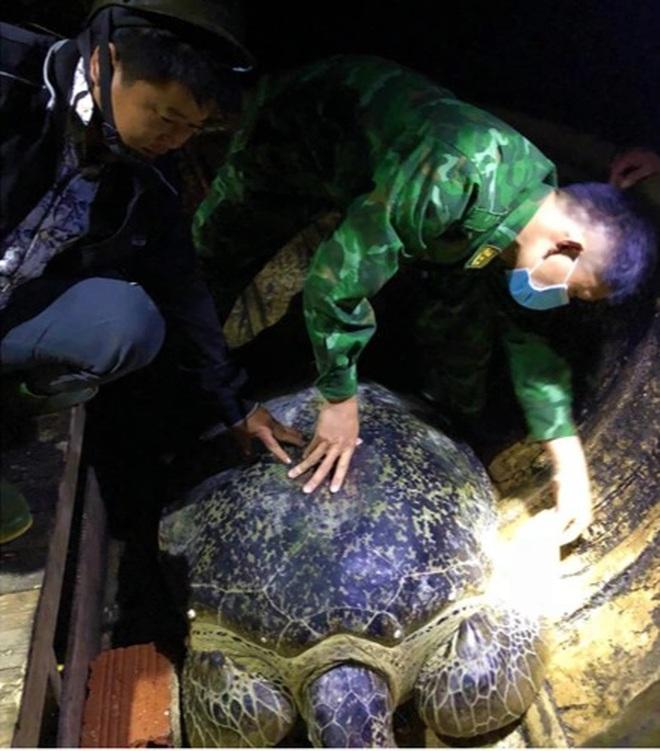 Rùa biển quý hiếm nặng hơn 120 kg mắc lưới ngư dân