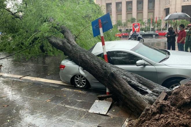 Cây me cổ thụ bật gốc đè bẹp xe Camry trong cơn mưa lớn ở Hà Nội - ảnh 1