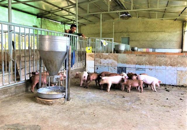Giá lợn thấp kỷ lục: Nông dân khóc ròng