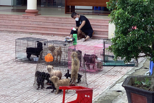 Chủ F0 đi cách ly, đàn chó 12 con được chăm sóc, tắm rửa: ''Để nó chết sao được'' - ảnh 1