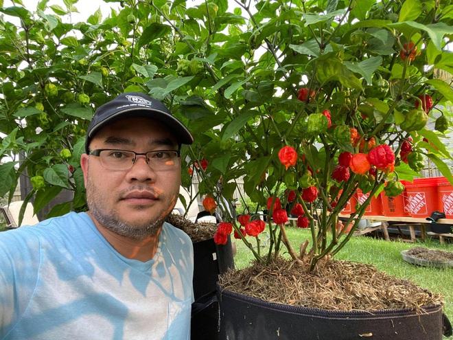 """Chi tiền """"tậu"""" đất và phân bón, ông bố gốc Việt làm vườn ớt giữa trời Tây"""