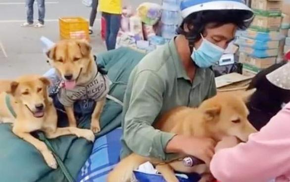 Cà Mau yêu cầu báo cáo vụ tiêu hủy 13 con chó của người về quê - ảnh 1