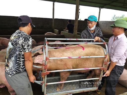Giá heo hơi xuống dưới 40.000 đồng/kg, Cục Chăn nuôi lý giải vì sao chưa đưa thịt heo vào diện bình ổn giá - ảnh 1